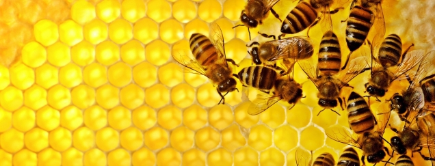 bees-on-honeycomb-1.jpg